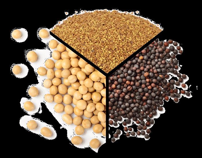 seeds chart